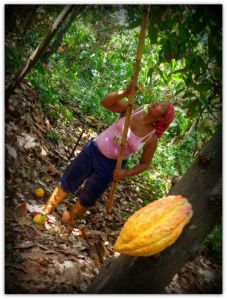 Katti working at the cocoa plantation / Fernando Carrizales.